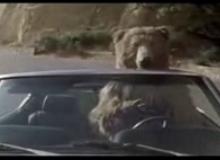 Skybag Bear